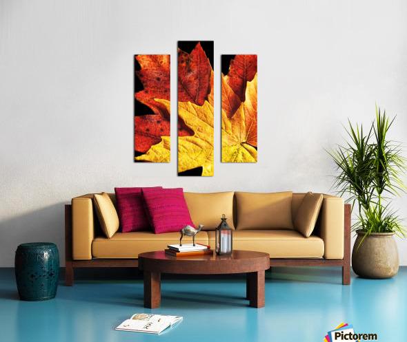 Fall Maple Leaves 2 Canvas print