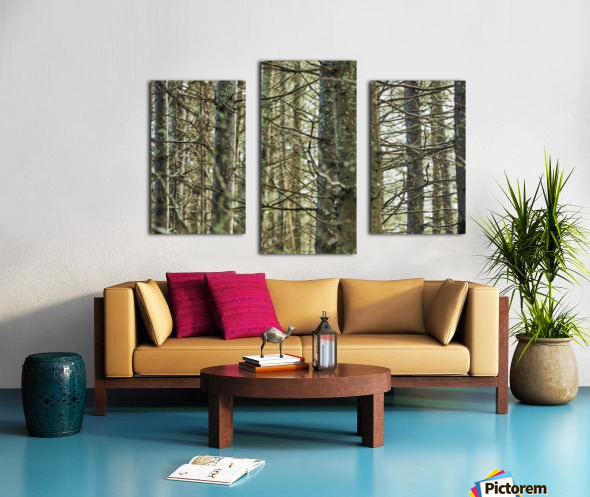 Trees in forest Mauricie National Park Quebec Canada Canvas print