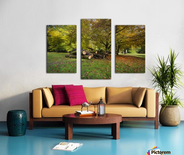 Autumn leaves and cut trees Canvas print