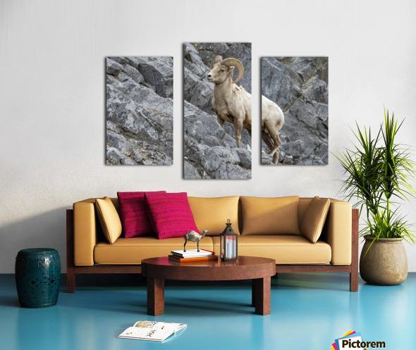 8016 - Big Horn Sheep Canvas print