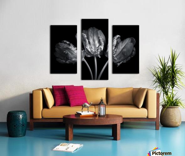 Three rococo tulips close-up Canvas print