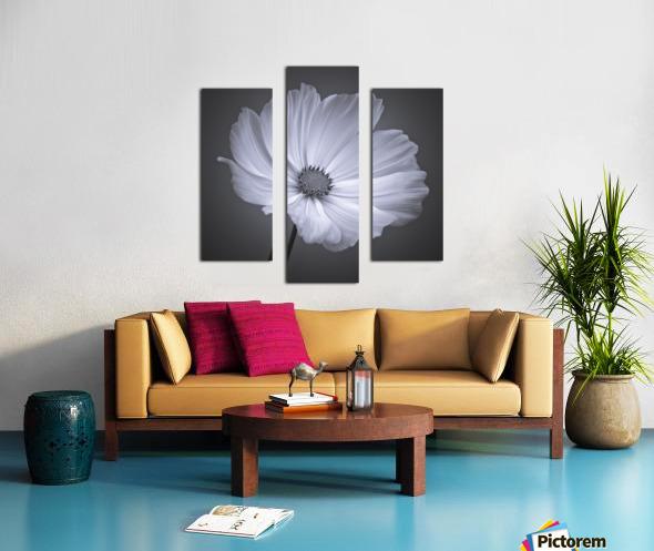 Cosmos flower Canvas print