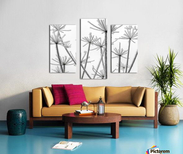 Frosty cow parsley Canvas print