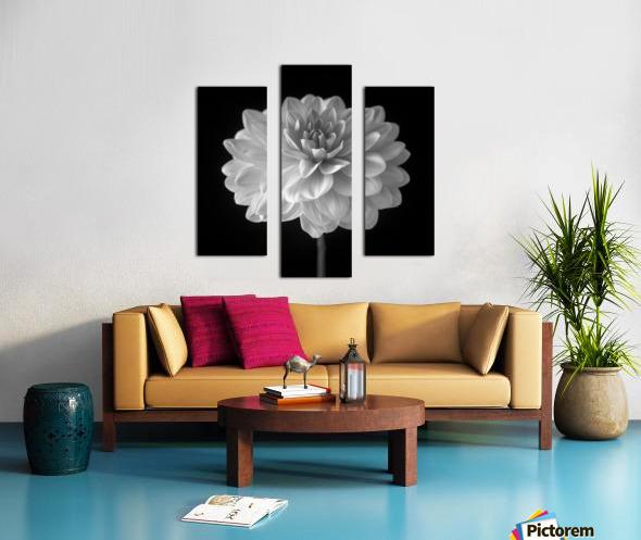 Dahlia flower on black background Canvas print