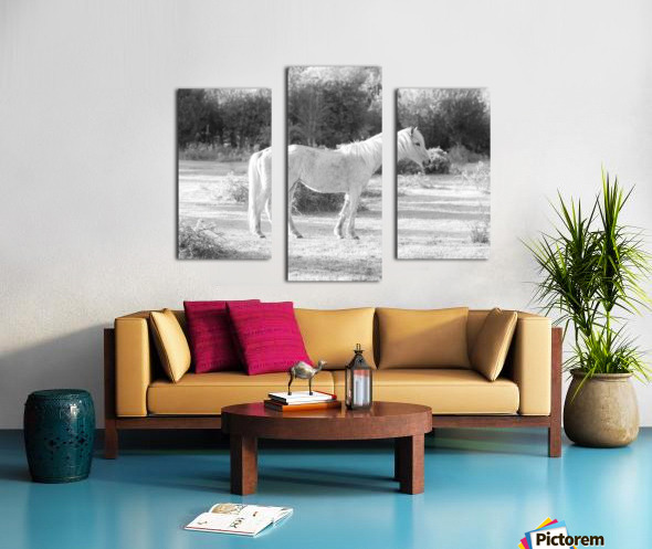 Horses at the New Forest, UK Canvas print