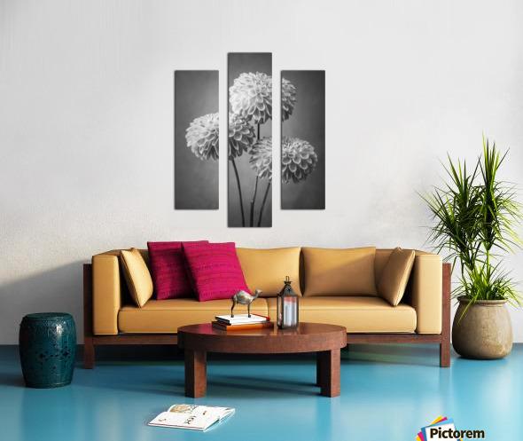 Three Dahlia flowers Canvas print