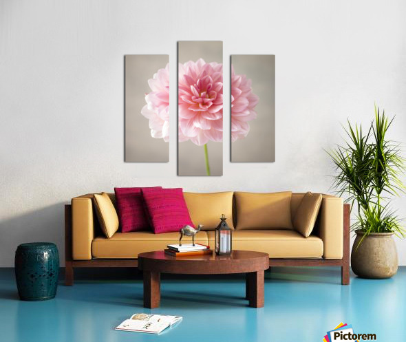Dahlia flower on colored background Canvas print