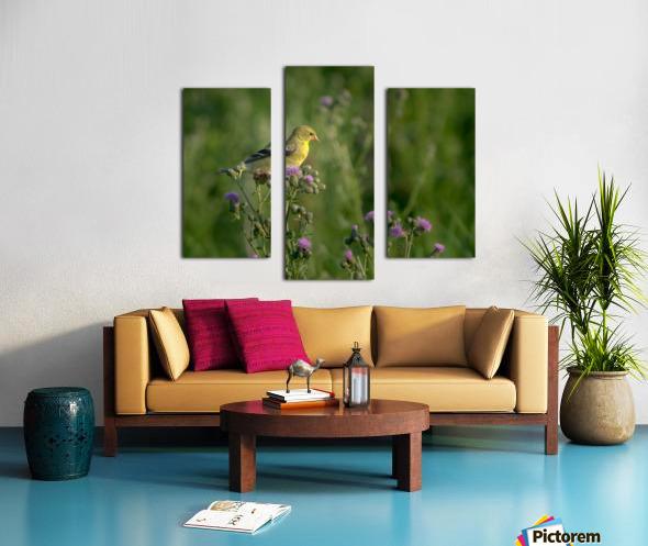 Goldfinch Female Canvas print