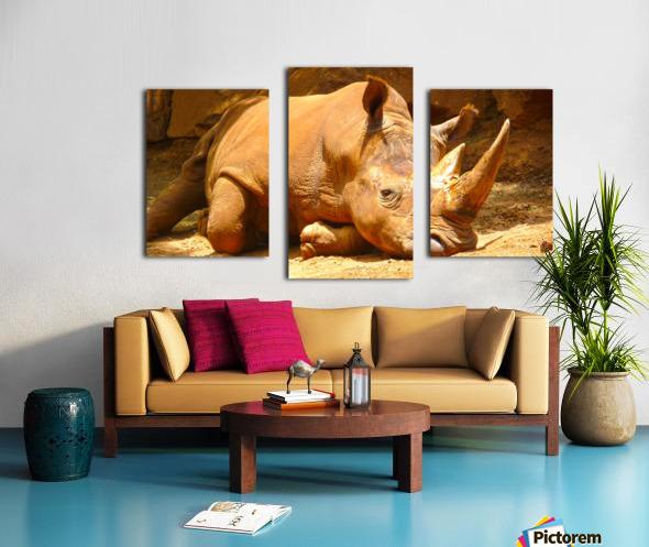 Rhino - Natural World Kids Gallery Canvas print