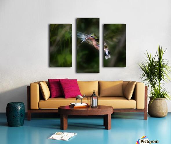 Hummingbird 1B by Leigh Pelton  Canvas print