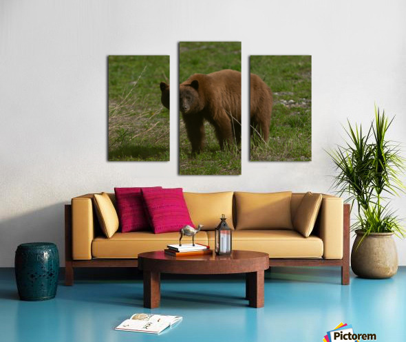 Cinnamon Black Bear Canvas print