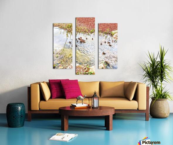 Spring Ducklings Canvas print
