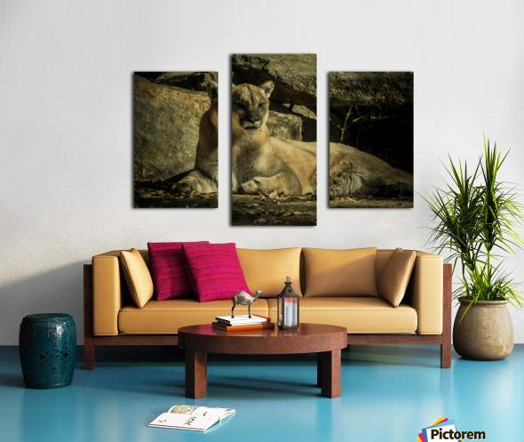 20181104 DSC 0070  3  3 Canvas print
