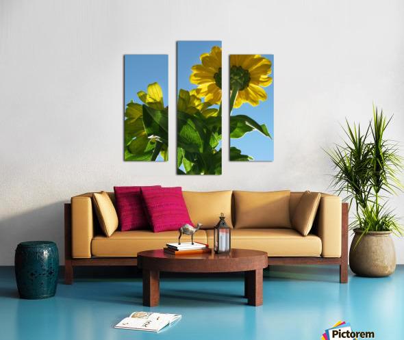 Summer Sky Flowers 8 AUG 2020 Canvas print