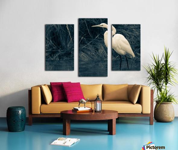 Great White Egret ap 1839 B&W Canvas print