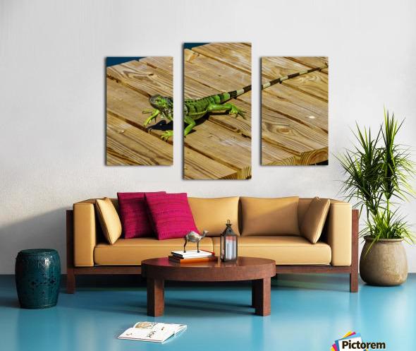 Cayman Green Iguana On Alert Canvas print