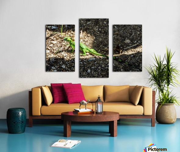Cayman Young Green Iguana  Canvas print