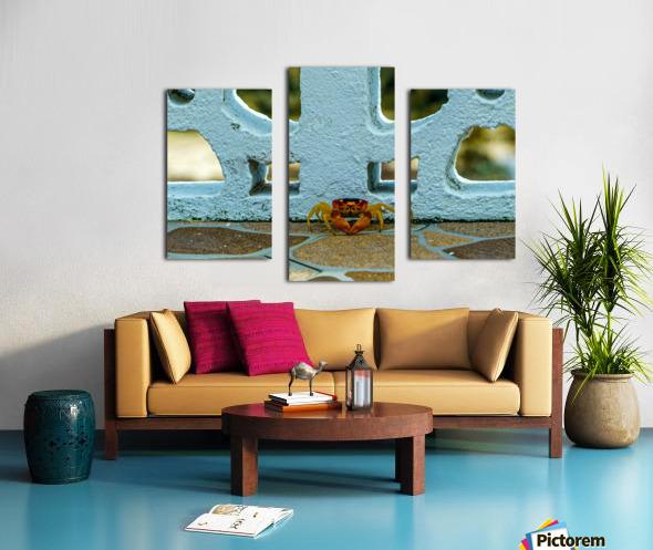 Cayman Crab Canvas print