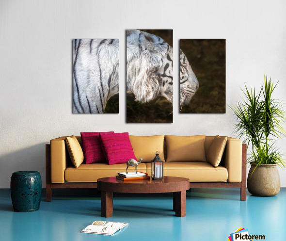 White Bengal Tiger 2 Canvas print