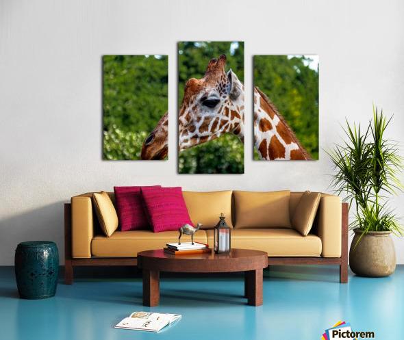 Reticulated Giraffe 1 Canvas print