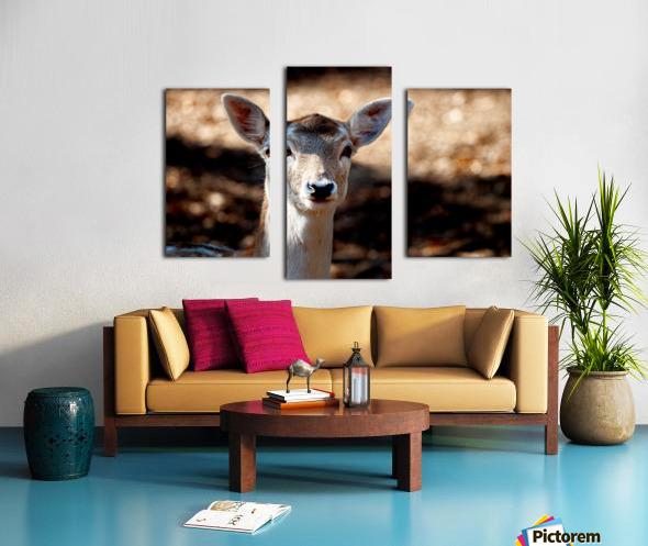 Fallow Deer 1 Canvas print