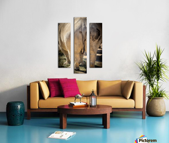Rhinoceros 2 Canvas print
