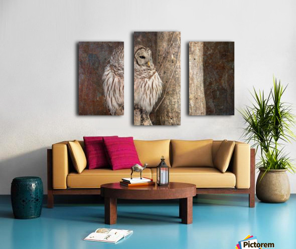 Barred Owl in Grunge Canvas print