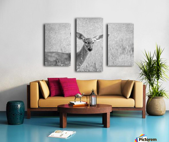 Pretty Doe Canvas print