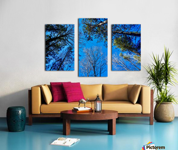Towering Trees Bright Blue Sky Canvas print