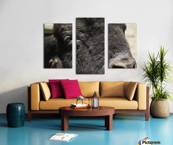 Reflection of a Buffalo Canvas print