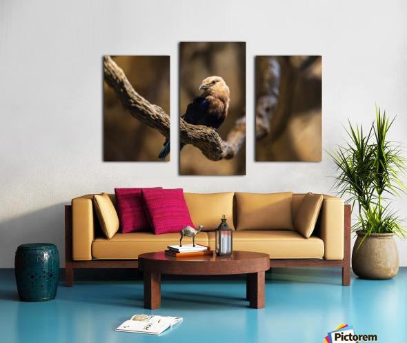 Perfect Pose  Bird  Canvas print