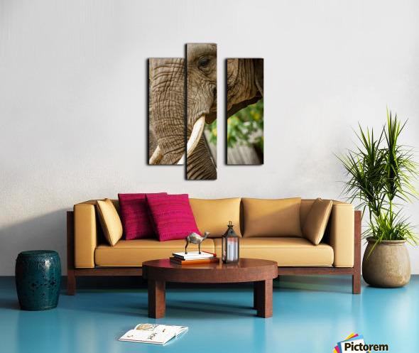 Wrinkles  Elephant  Canvas print
