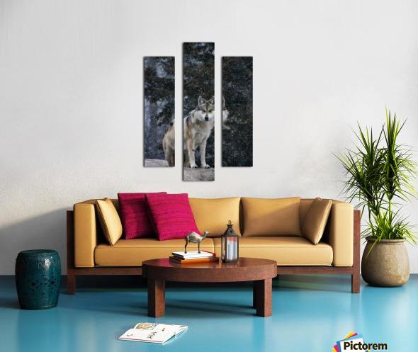Cold Night Wolf Canvas print