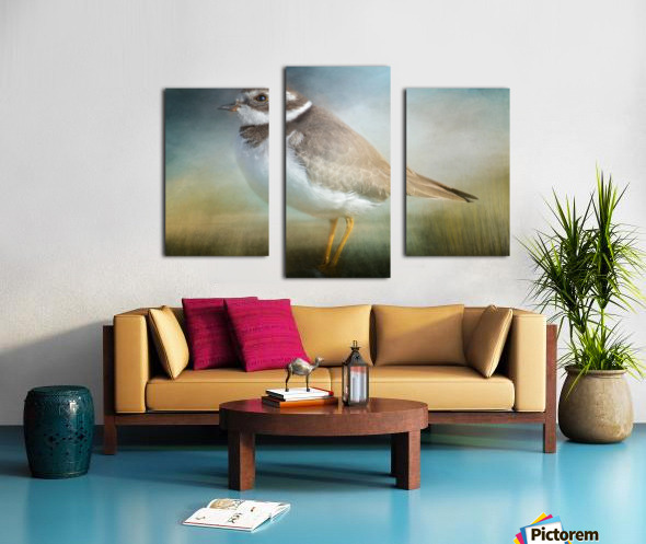 Semipalmated Plover Canvas print