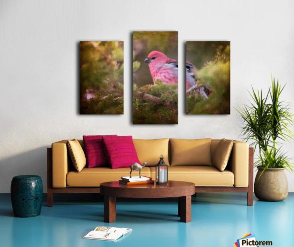 Male Pine Grosbeak Canvas print