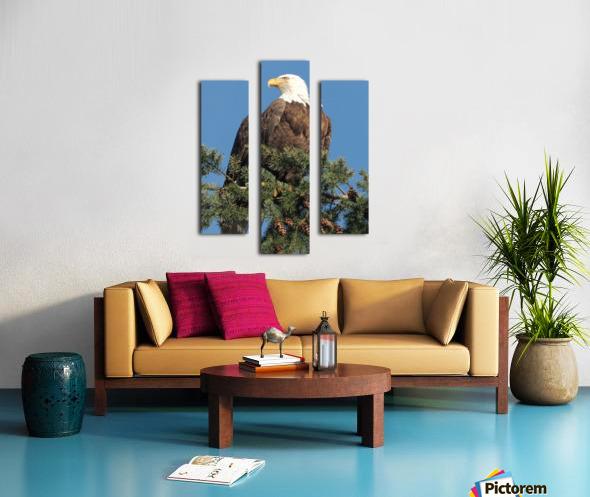 Bald Eagle at Herring Season  Canvas print