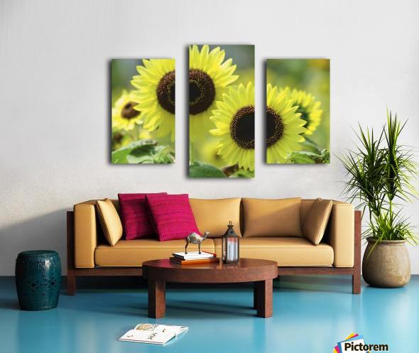 landscape_2_0976 Canvas print