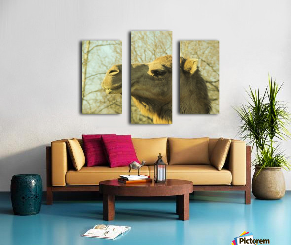 Aribian Camel Canvas print