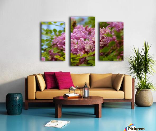 Rose Acacia  Canvas print