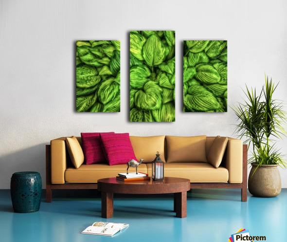 Hosta Glow Canvas print