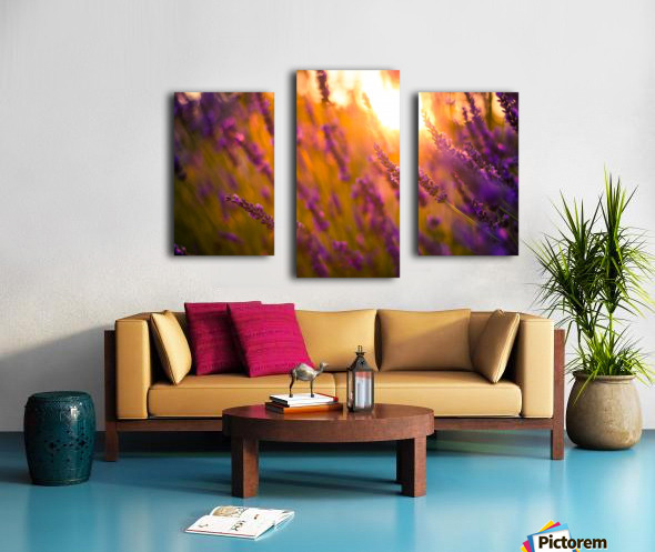 Sunset lavender flowers Canvas print
