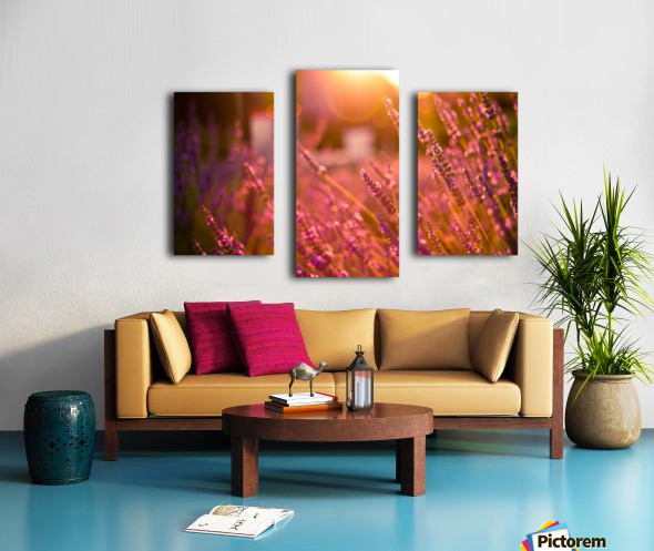 Sunset lavender flowers Canvas print