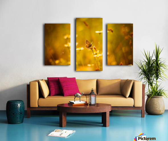 Golden sunset. Daisy and butterfly Canvas print