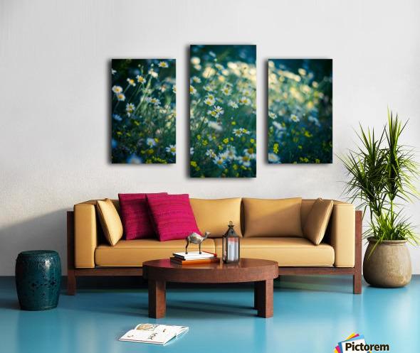 Summer, spring daisy field Canvas print