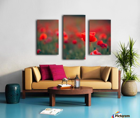 Beautiful Sunset poppy flowers Canvas print