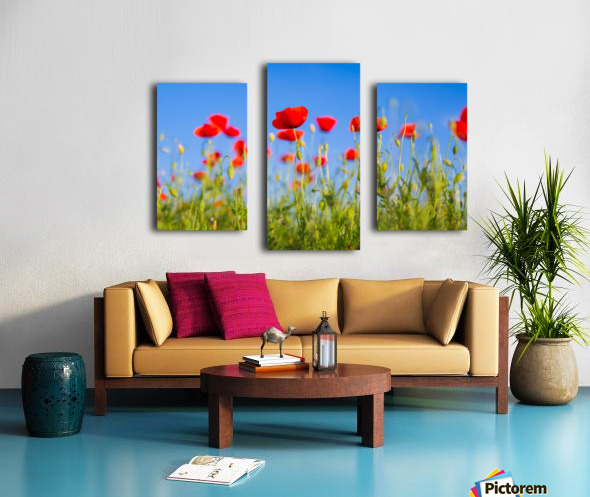 Beautiful Sunset poppy flowers Canvas print