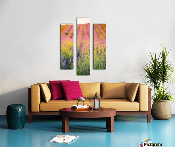 Beautiful Sunset lavender flowers Canvas print
