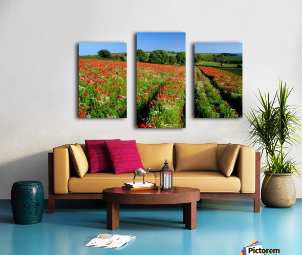 Ablaze of colour Canvas print