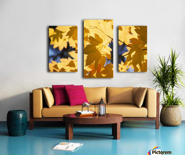 Vine Maples Leaves In Autumn Canvas print