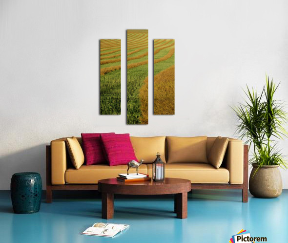 Rows Of Canola Windrows Canvas print
